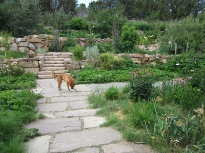 Kitchen Garden & Coop Tour 2014 - San Isidro Permaculture Edible Garden Terraces and Dog