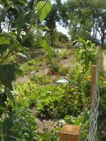Santa Fe Railyard Community Garden 2009