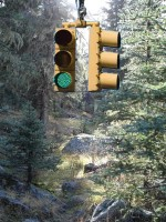 Traffic Signal in the Forest