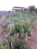 Kitchen Garden & Coop Tour 2014 - Gaia Gardens Sunflowers and Shade Structure