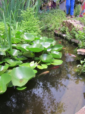 Kitchen Garden & Coop Tour 2014 - The Raincatcher Koi Pond