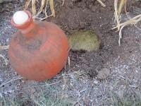 Olla and encircling root bowl